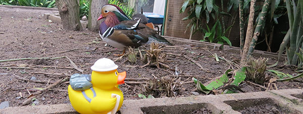 world of birds 1